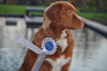 Brussels Dog Show 2015